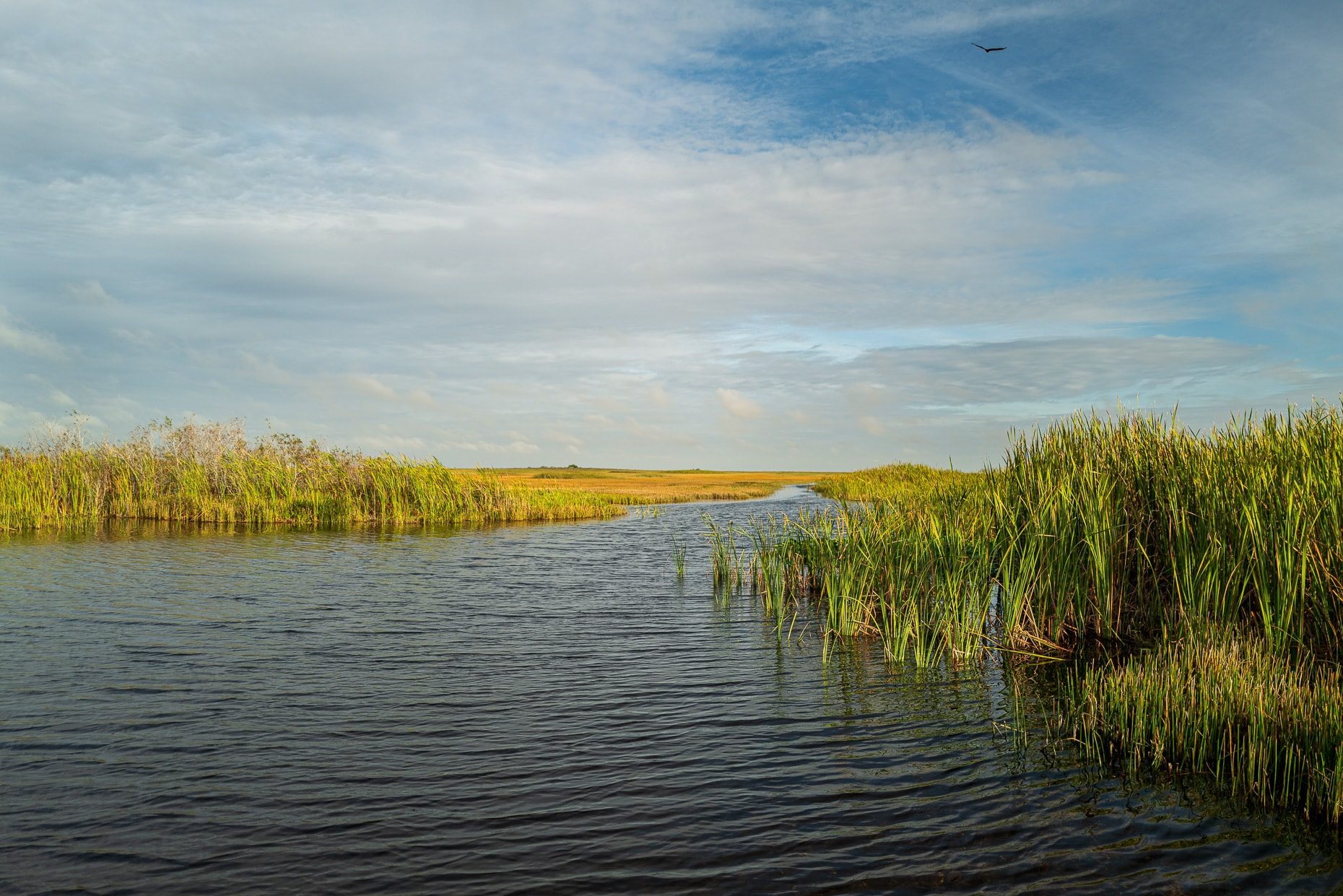Channel in the Everglades